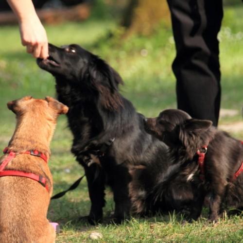 mala šola za pse