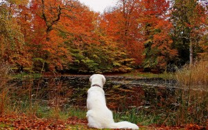 leaf-autumn-water-park-container-dog