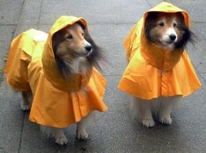 shelties-dog-with-hooded-raincoat