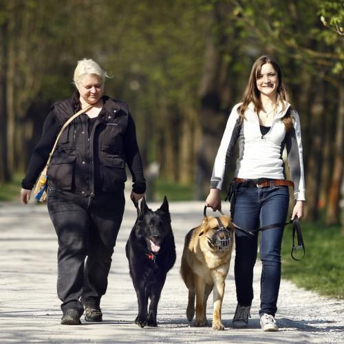 Prevzgoja problematiènih psov v Ljubljani 18. aprila 2013.