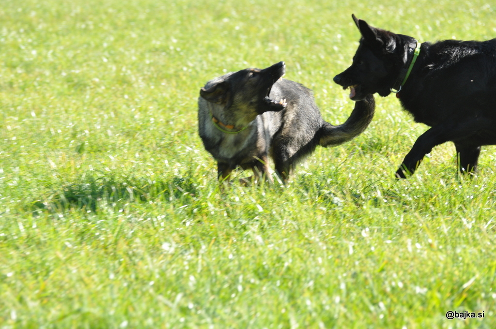 napad psa
